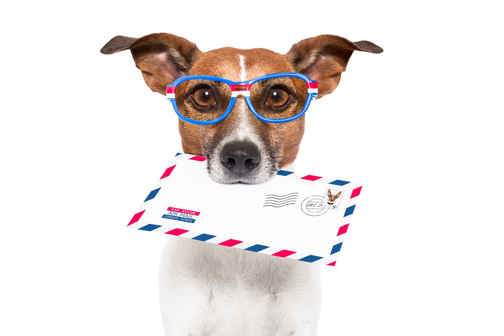 1530105830_sm_emailkurs_Hund-mit-Brief.jpg